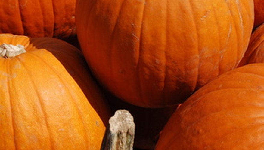 Pumpkins harvested in the wintertime can be stored longer in Florida then other times of the year.