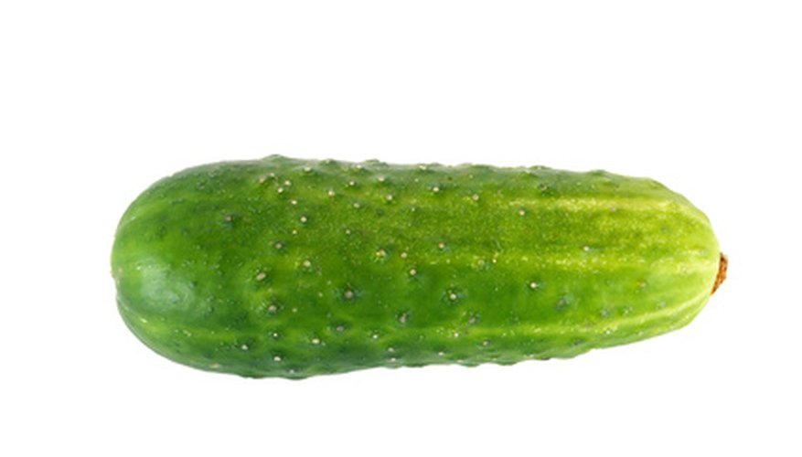 Smaller, thin-skinned cucumber used for pickling