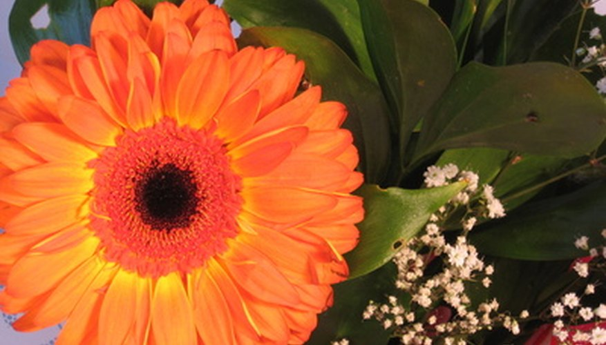 Gerber daisies are just one flower you can put in trumpet vases.