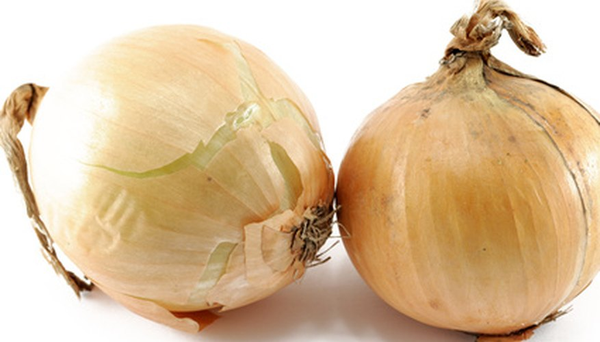 Mature onions ready for eating