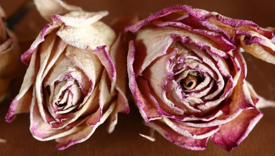 Drying flowers is simple and extends the life of your flowers.