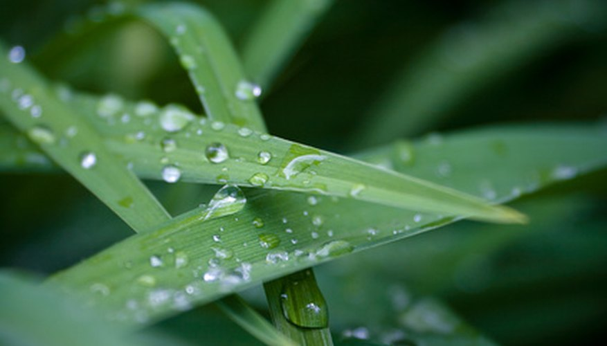 Tap water should always be used in the garden if rain water in your area is too acidic.