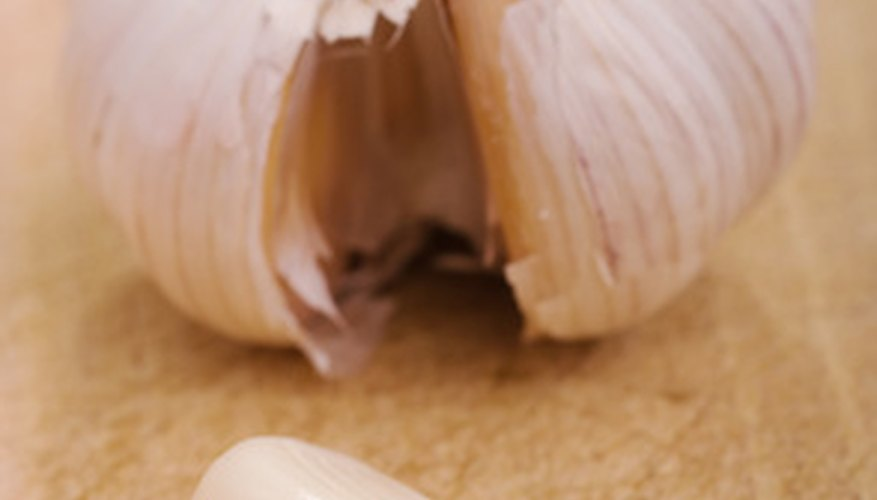 Garlic bulb and garlic clove