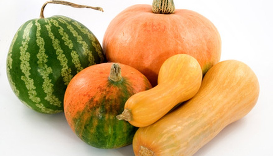 Pumpkins and acorn squash growm from heirloom seeds in Montana.