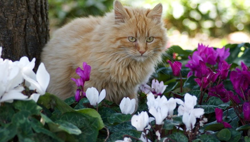 Cats are attracted to flowers.