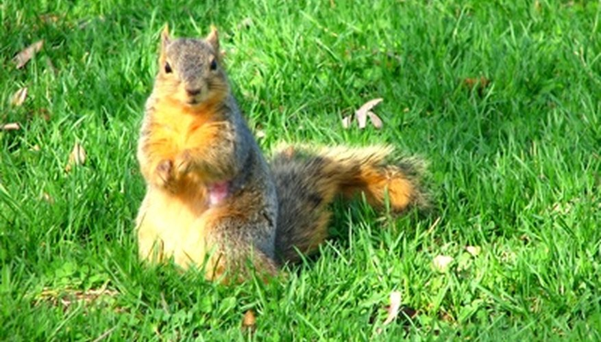 Squirrels may seem adorable until they get into your vegetable garden.