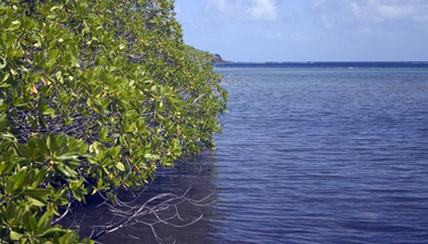 Mangroves can survive in brackish water.