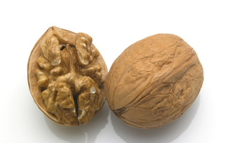 A walnut possesses a flesh center surrounded by a hard shell.
