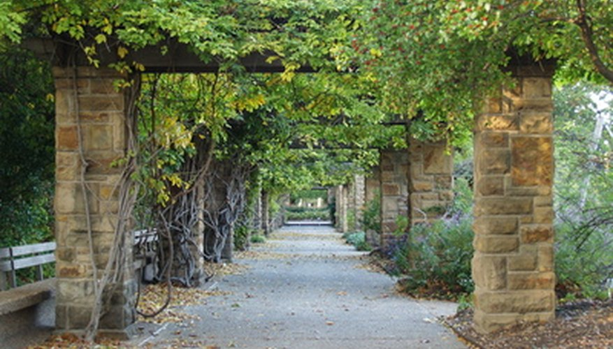 Climber plants require physical support to properly grow into fully developed plants.