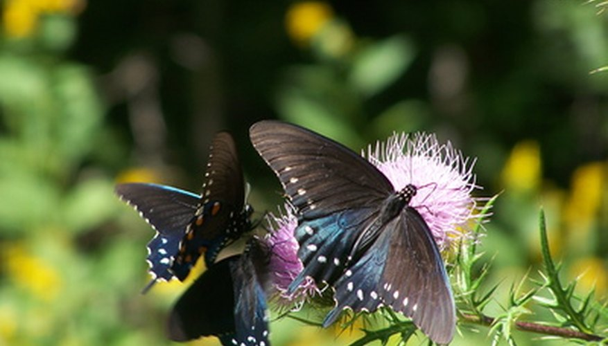 Plant native wildflowers to attract birds and butterflies to your urban yard.