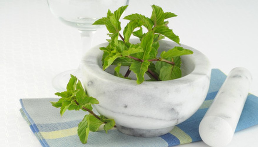 Mint plants start readily from cuttings.