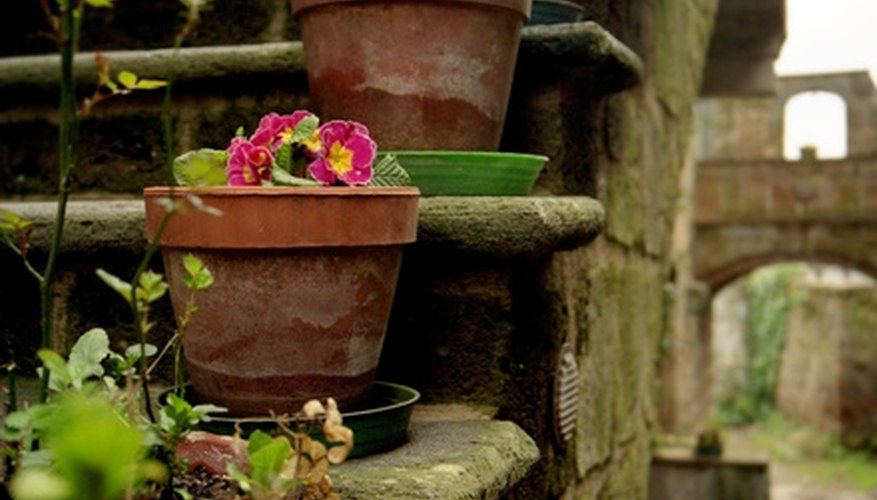 Grow potted plants to enhance a room's ambiance.