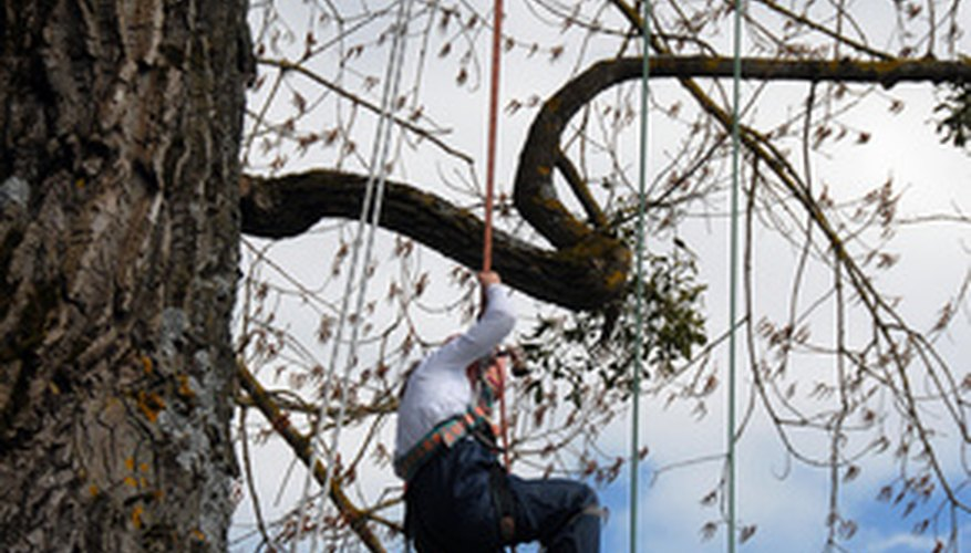 Tree rigging is one way rope is used as a tool for trimming trees.