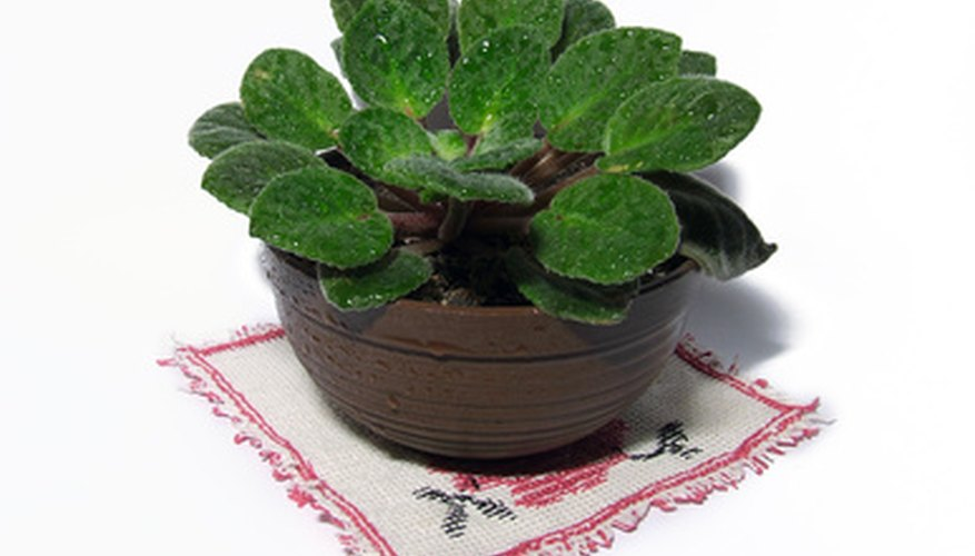 Make a healthy soil for your houseplants.