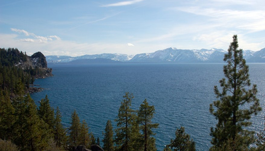 Majestic pines soar above Lake Tahoe.