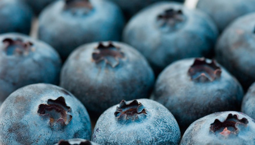 Several varieties of blueberries grow in Pennsylvania.
