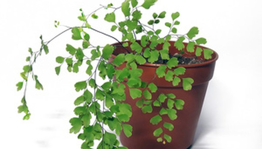 Houseplant survival rates can be improved through effective water systems.