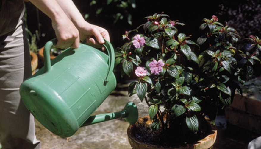Watering cans are the traditional watering device.