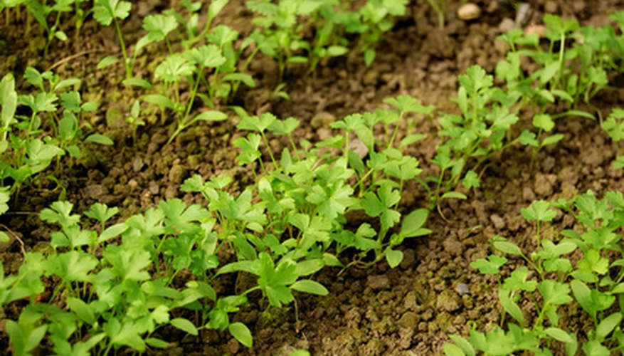 Test your garden soil to get plants off to the best start.