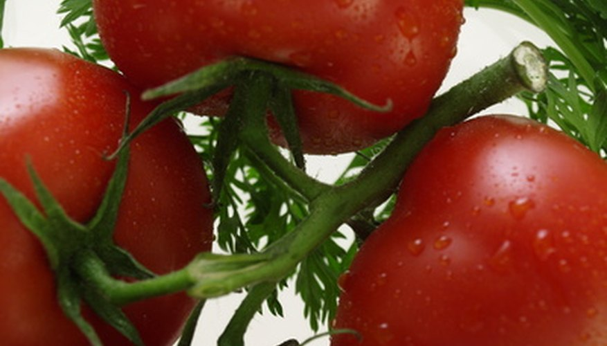 Tomato plants thrive with the heavy feeding method used in straw bale planting.