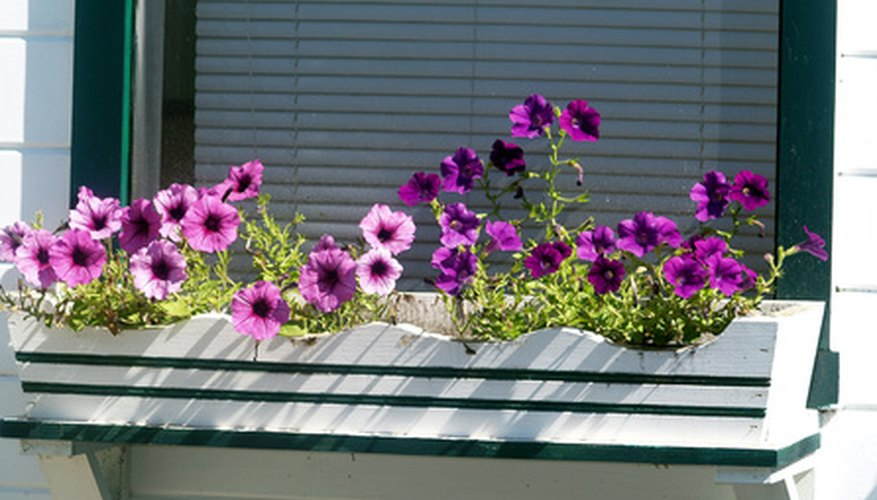 A window box with colorful petunias