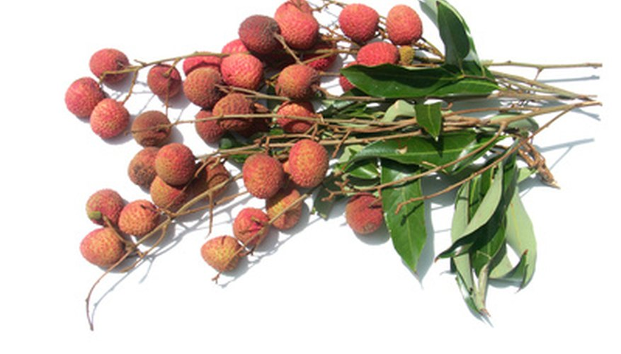 Lychee trees are susceptible to several diseases.