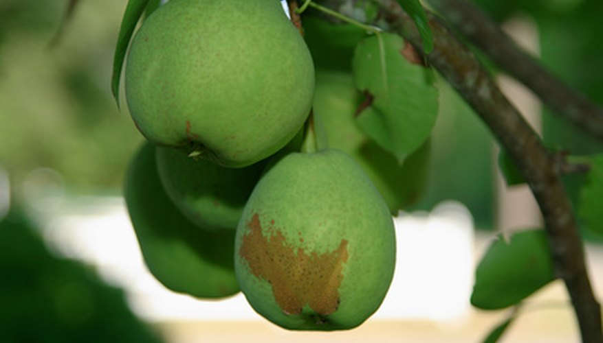 Select fruit trees that grow well in the proper USDA hardiness zone for Virginia.