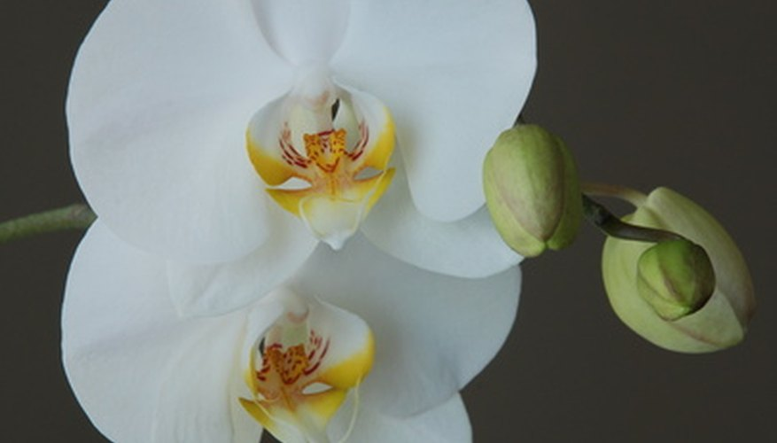 Make a beautiful corsage with orchids.