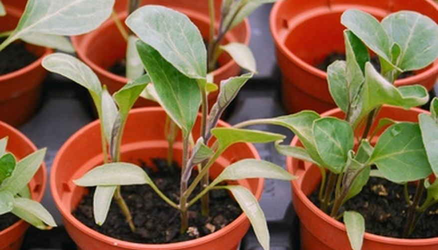 Starting seedlings indoors extends your gardening season.