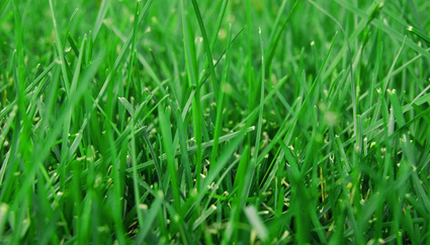 Freshly cut green lawn grass