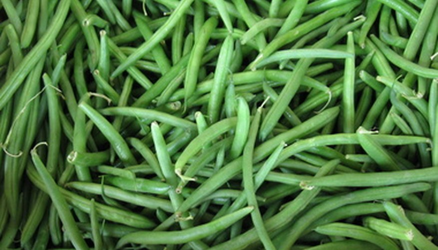Green beans that have been harvested.