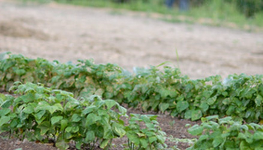 Weeds In Vegetable Garden Part - 34: Control Weeds When Plants Are Small, And Youu0027ll Have Less Work To Do
