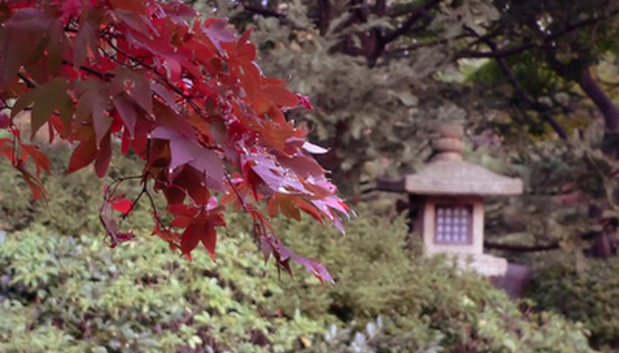 Japanese maple trees are the smallest of the maple family.