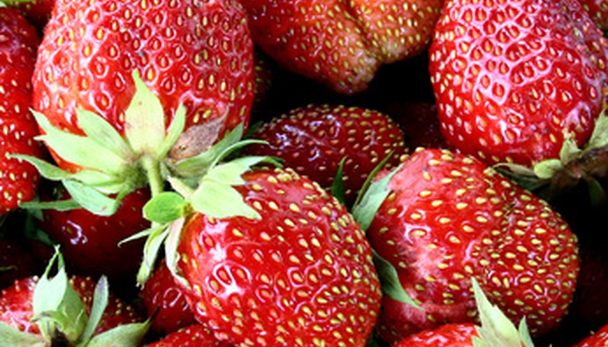 Strawberries can produce an abundance of fruit.