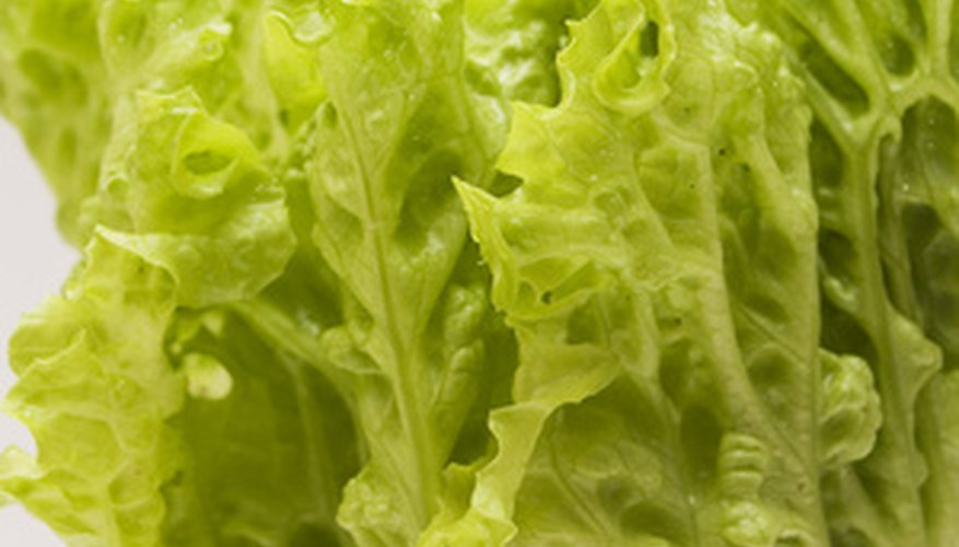 Lettuce is a leafy annual.
