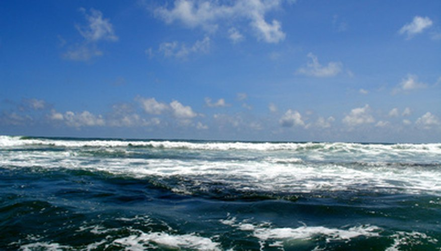 The Indian Ocean provides habitat for seagrasses, phytoplankton and other photosynthetic organisms.