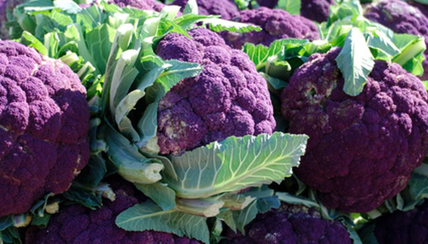 Why not grow purple cauliflower during the fall and winter in Florida?