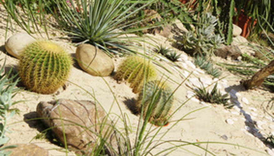 Conserve water by installing a desert landscape in your yard.