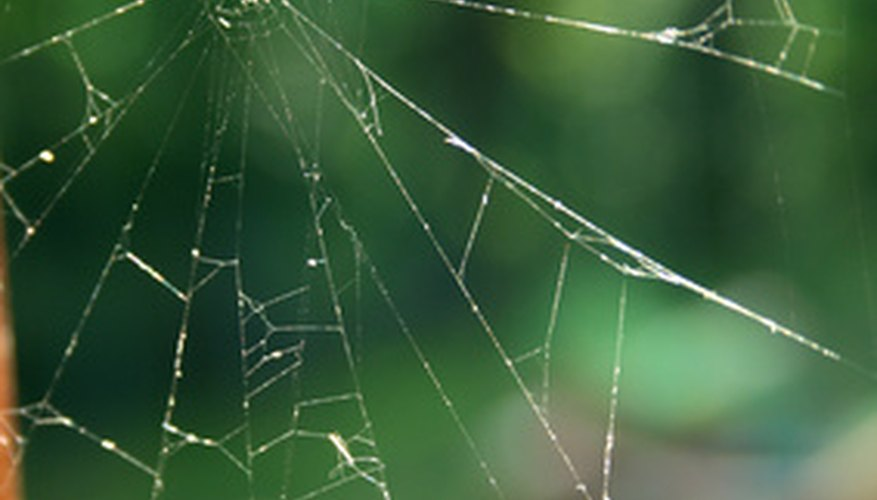 The common house spider's web is a tangled affair.