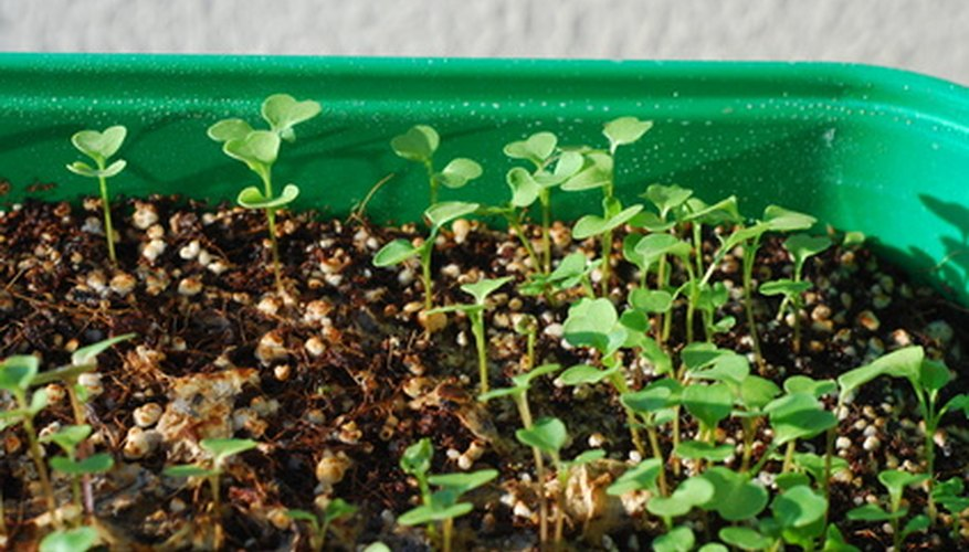 Begin seeds indoors for a head start on spring gardening