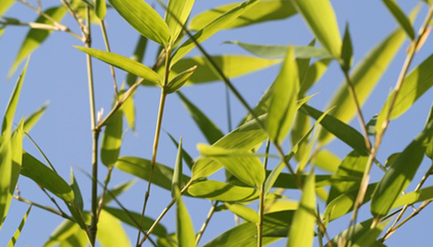 Allow leaves to litter the ground, providing nutrients to the bamboo.
