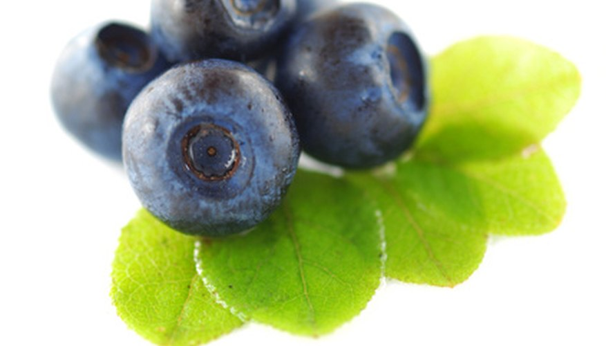 blueberries grow best in acidic soil