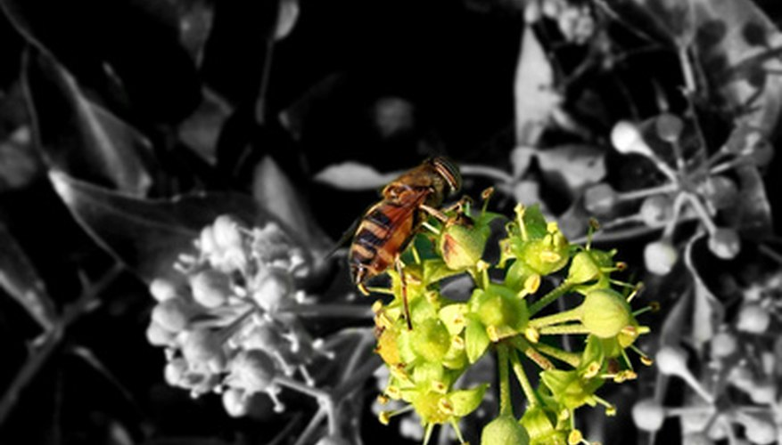 Bees are an important part of the reproduction process of many flowering plants.