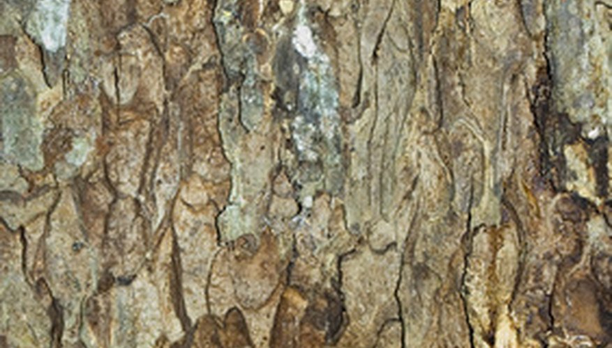 Treat fungus on your fruit or landscape trees.