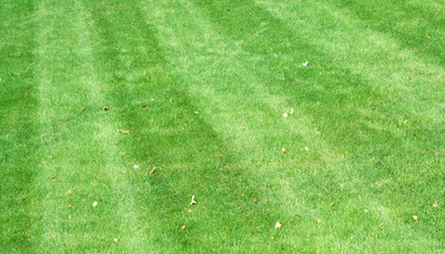Lawns across America benefit from the Craftsman cut.