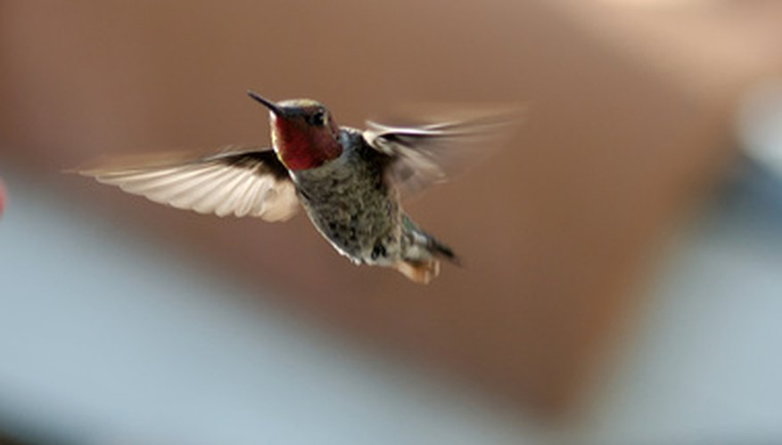Trinidad and Tobago is known as the land of the hummingbirds