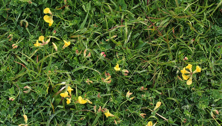 Ground covers are dense, green carpets that can easily be transplanted from one location to another.