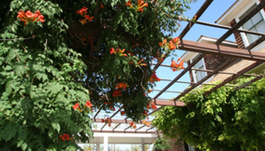Trumpet vines, or trumpet creepers, have unique flowers and pinnate leaves.