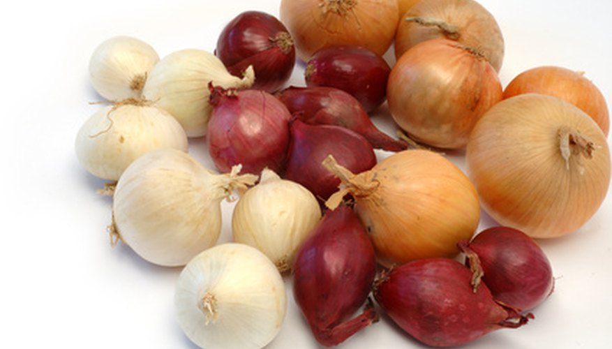 Onions can be grown from bulbs.