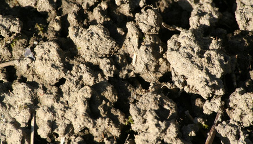 Compost is brown and crumbly with an earthy smell.